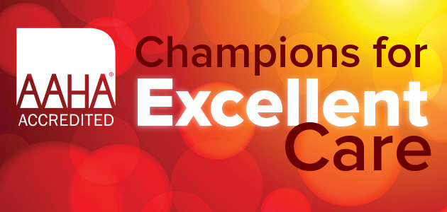 AAHA Champions for Excellence